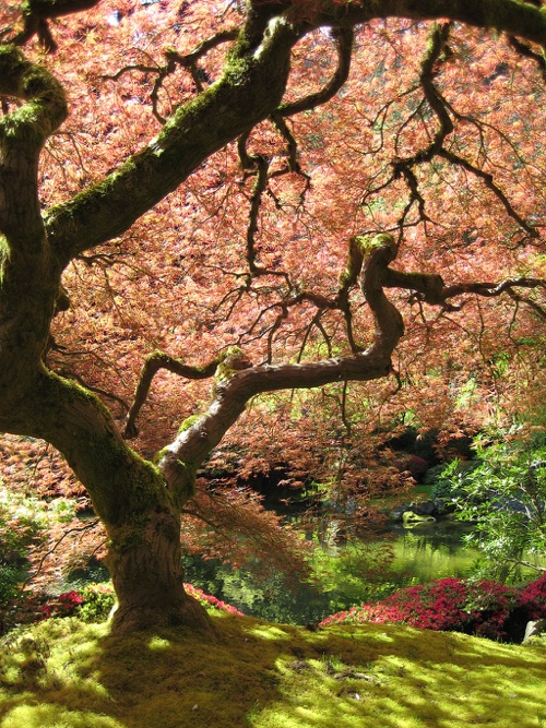 Portland Vacation Rental-Portland_Japanese_Garden_maple_Wikipedia